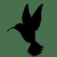 colibri_x